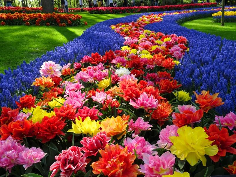 キューケンホフの花